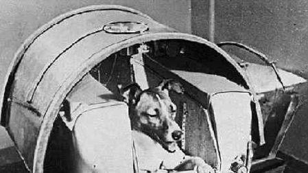 如何能在太空中养宠物? NASA宇航员告诉我们一个有趣的答案
