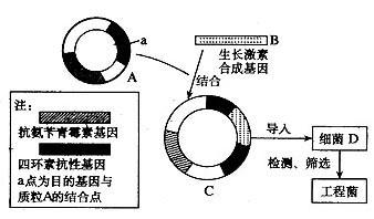 质粒的抽提原理分析_数据分析