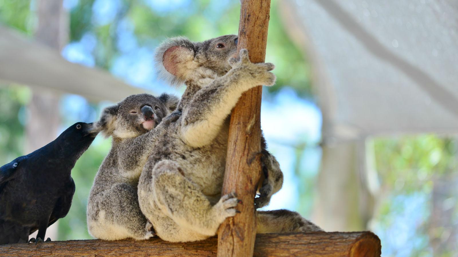 澳大利亚旅游攻略图片41
