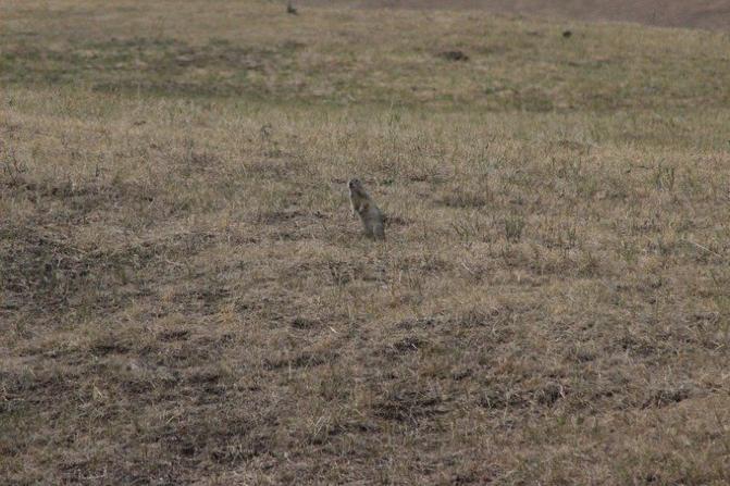 呼伦贝尔大草原旅游攻略图片96