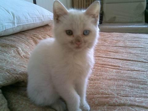 猜成语 猫生是什么成语_疯狂猜成语猫生答案是什么