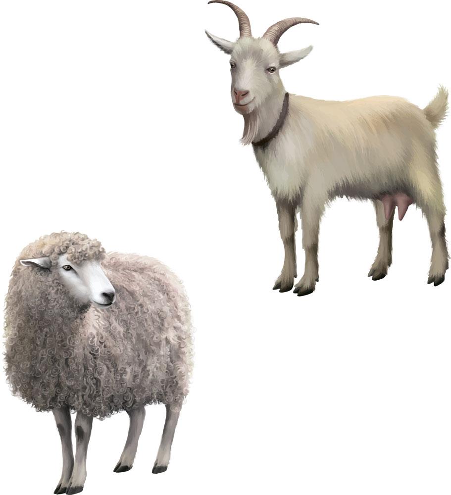 都说属羊的女生命不好