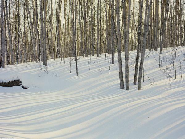 落日和雪的诗句