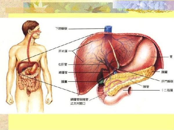 慢加急性肝衰竭的症状