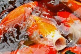 孕妇梦见一河里全是鱼