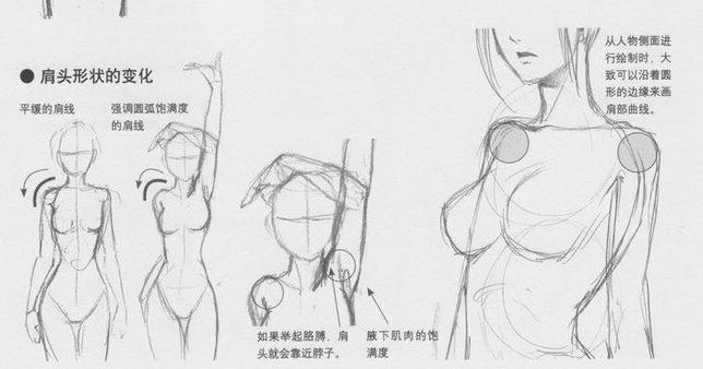 动漫人体结构_求日本动漫人物人体结构绘画步骤图
