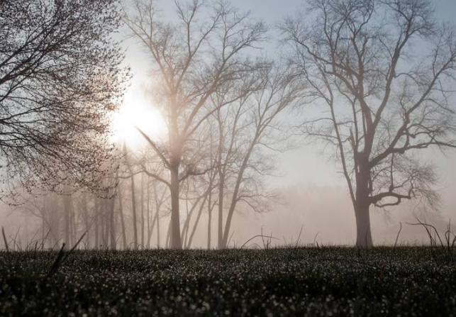 早上大雾的诗句