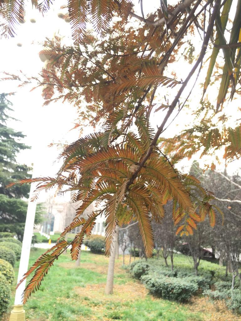 梦见特别高又直的树 梦见几棵大树又高又直