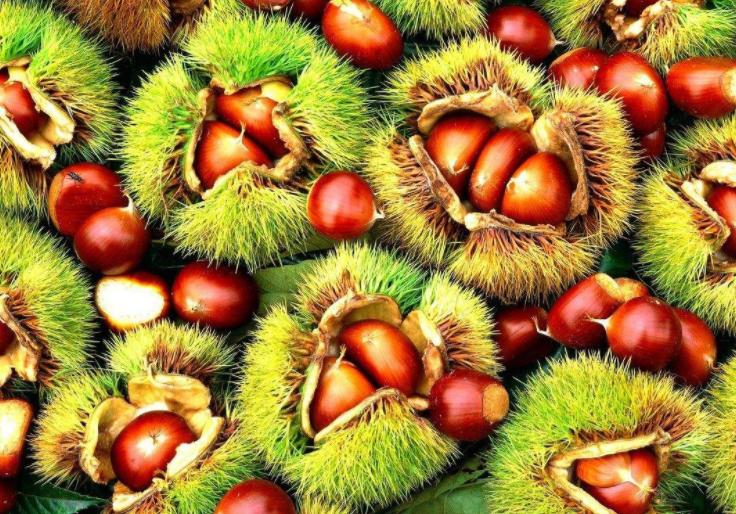 秋天有哪些水果_秋天成熟的水果有哪些?_百度知道