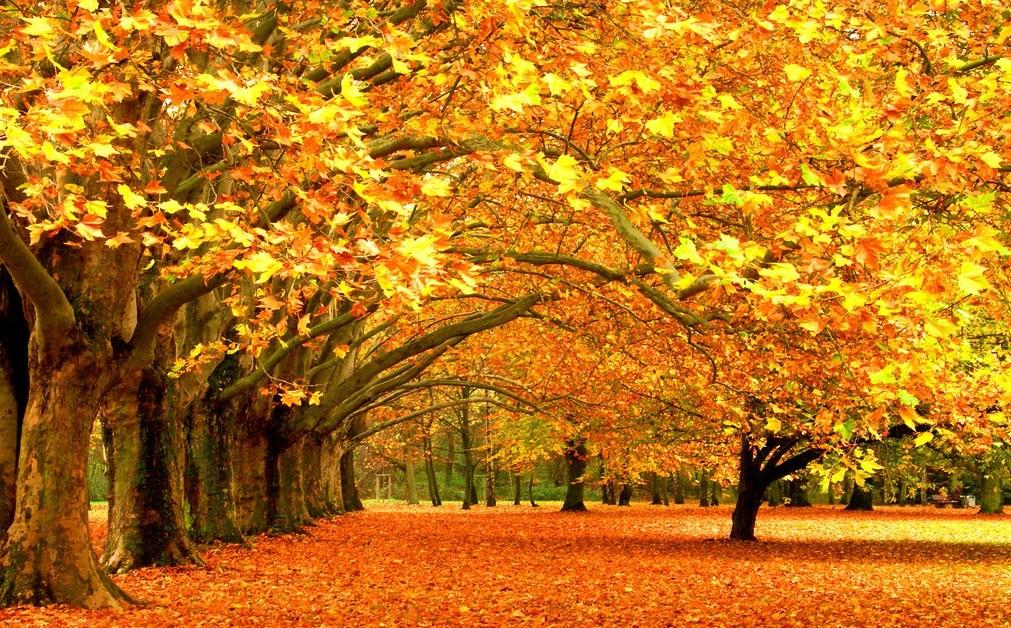 秋天的景色作文五十字