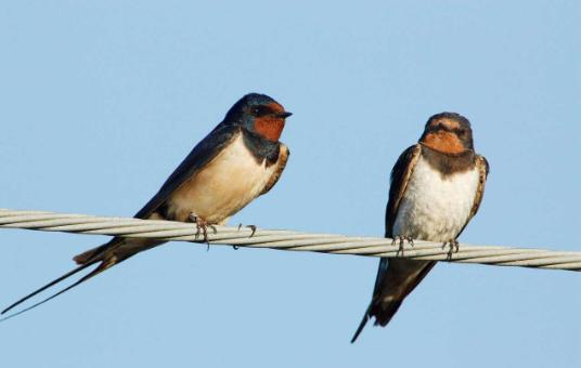 有燕子的古诗词 有关燕子的古诗