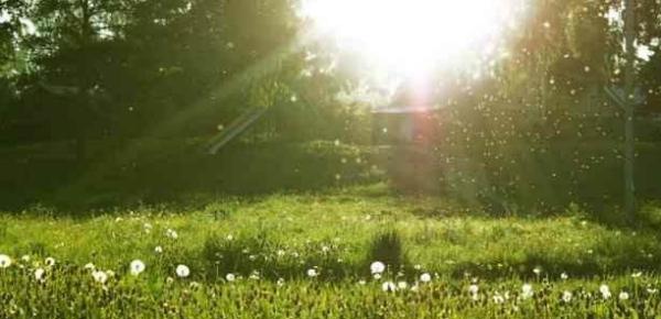 关于夏天的阳光的诗词 描写夏天太阳的诗句