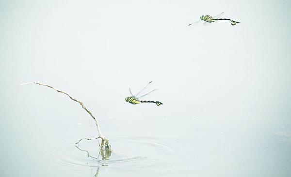 浅尝辄止是什么意思_蜻蜓点水是什么意思_百度知道