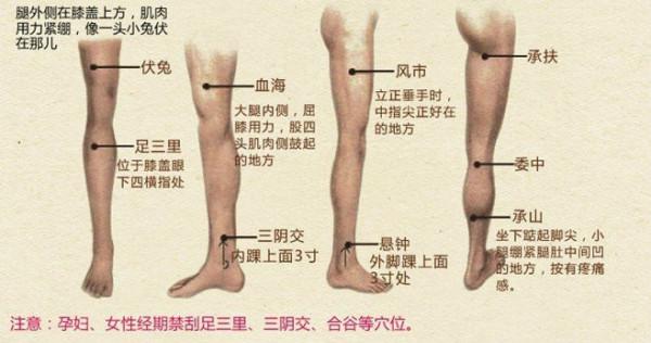 腹部减肥拔罐穴位图_腿部拔罐的穴位在哪_百度知道
