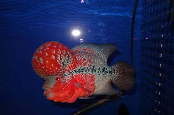 可用一个小功率的潜水泵 水族资讯