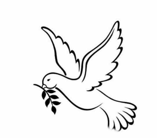 和平鸽简笔画 鸽子简笔画 和平鸽的画法