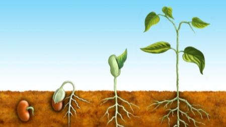 植物为何会向上生长?它们有方向感吗?