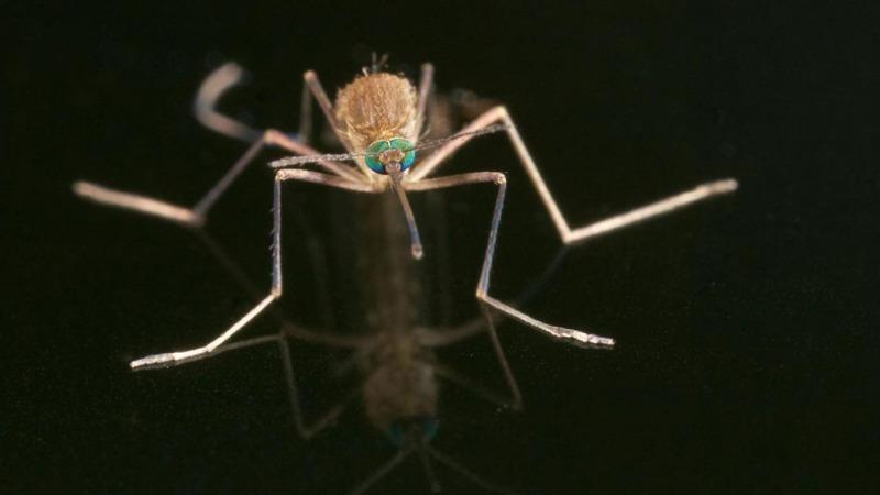 以牙还牙:向空中抛撒蚊子