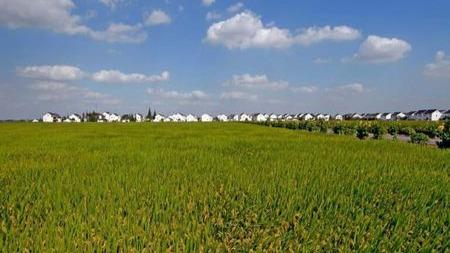 农村土地流转一般多少钱一亩?的头图