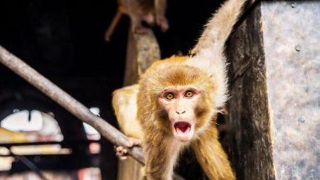 """人-鼠、人-猴""""杂交""""胚胎要来了?#38752;?#23398;家到?#33258;?#24178;什么?"""