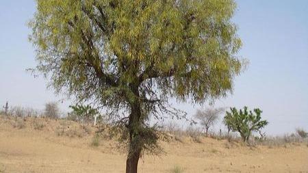阿拉伯土豪为什么烧钱搞绿化?的头图