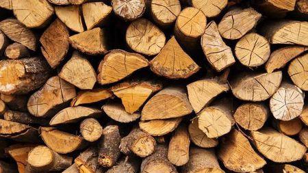 """比钢更硬,还能够阻止高速子弹,这就是""""超级木材""""!"""