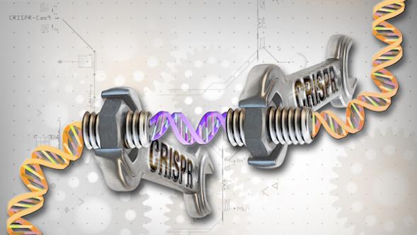 若人类自己编辑基因组,会引发什么伦理和道德边界?
