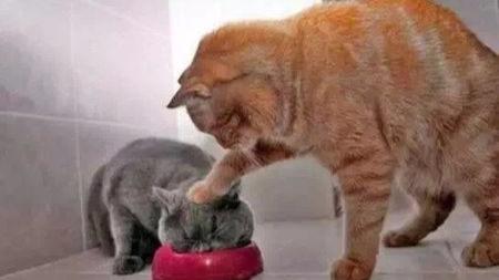 家猫的等级金字塔,白小姐的猫生经验