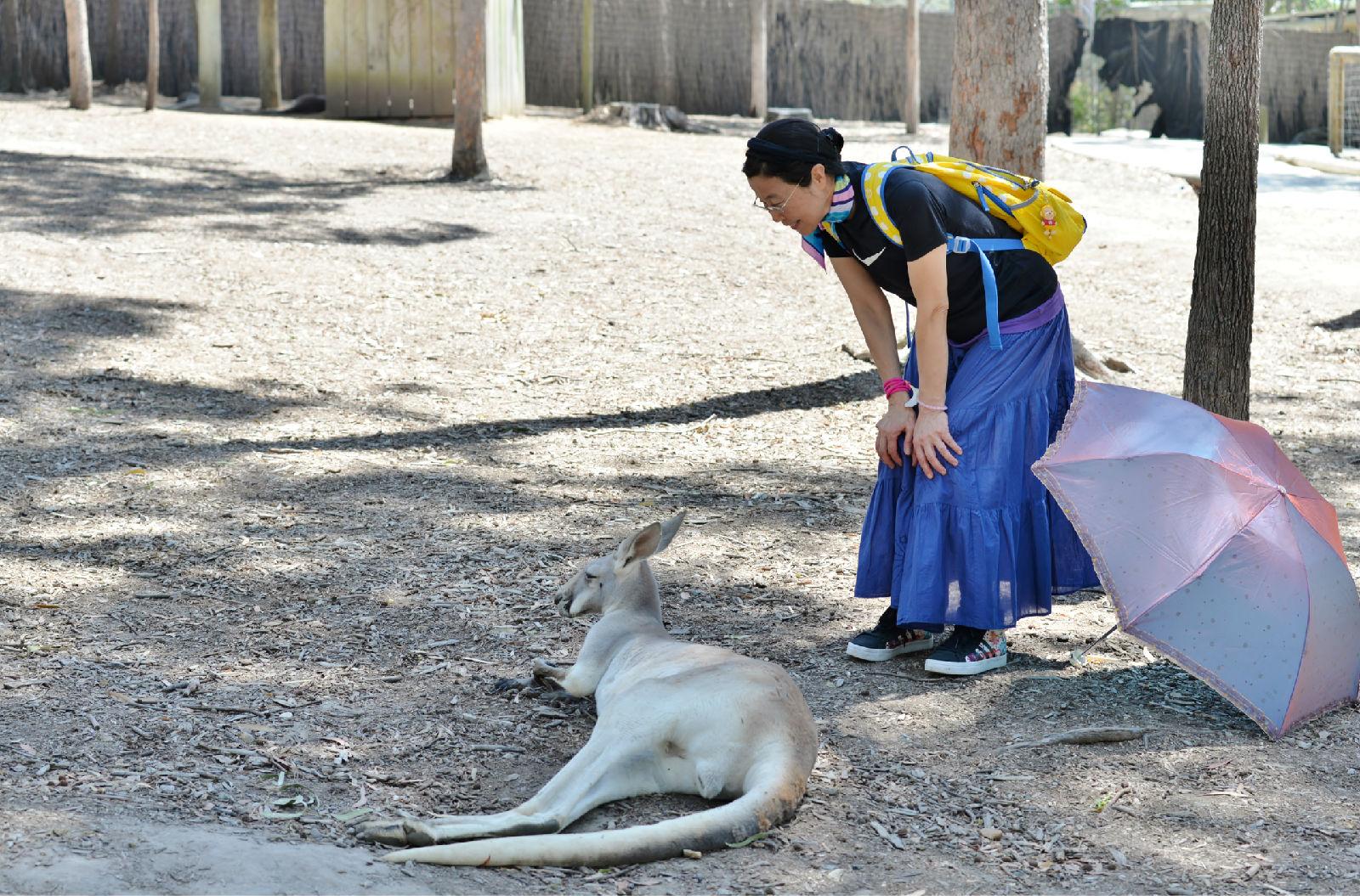 澳大利亚旅游攻略图片52
