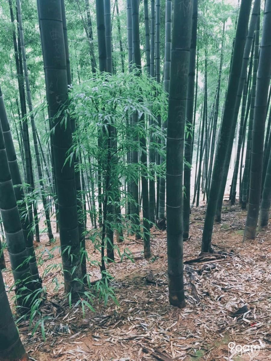 莫干山旅游攻略图片6