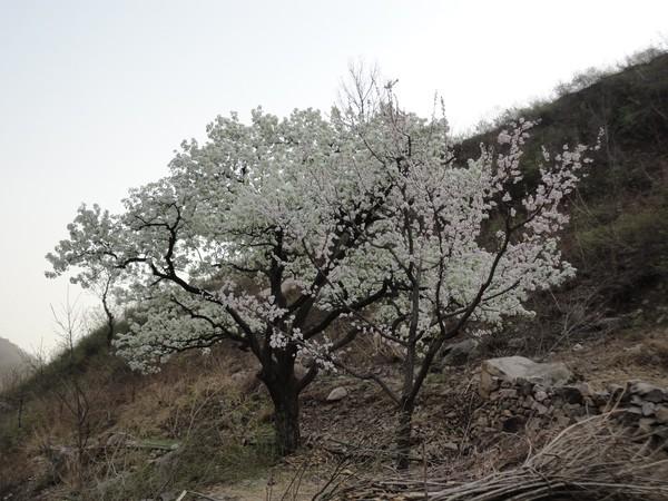 天津蓟县旅游攻略图片51