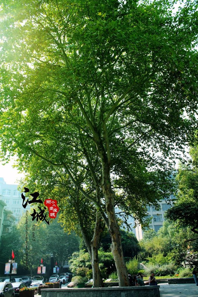 武汉旅游攻略图片139