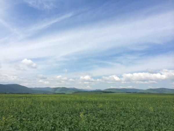呼伦贝尔大草原旅游攻略图片220