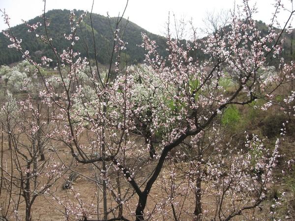 天津蓟县旅游攻略图片5