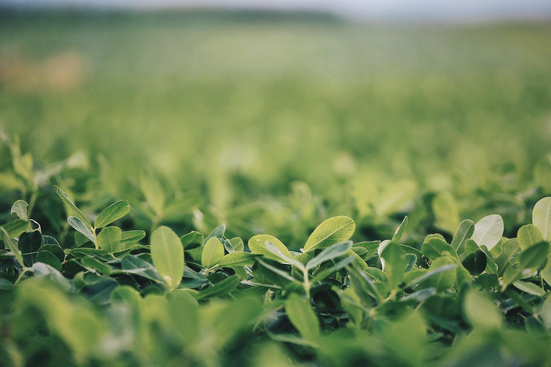 绿色的大地-图片