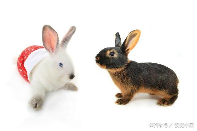 生肖兔一生的克星是谁