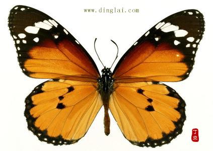 情色蝴蝶�y.d:`�_蝴蝶到底是保护色还是警戎色
