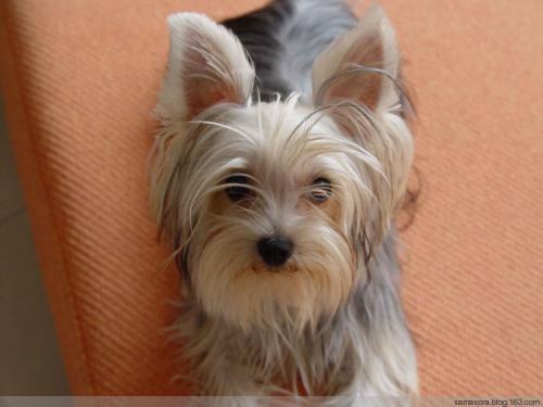 各种狗的图片_宠物狗的各种种类介绍+图片_百度知道