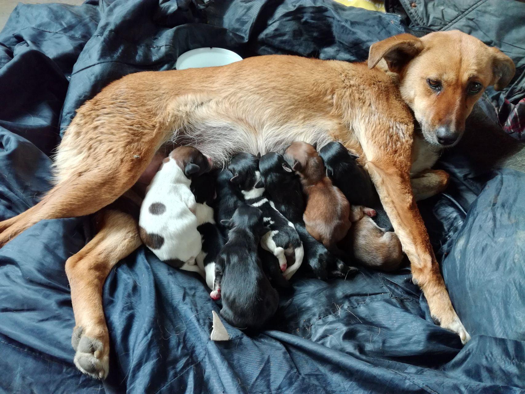 生宝宝前的准备工作_小狗生产怎样能知道它生完了_百度知道