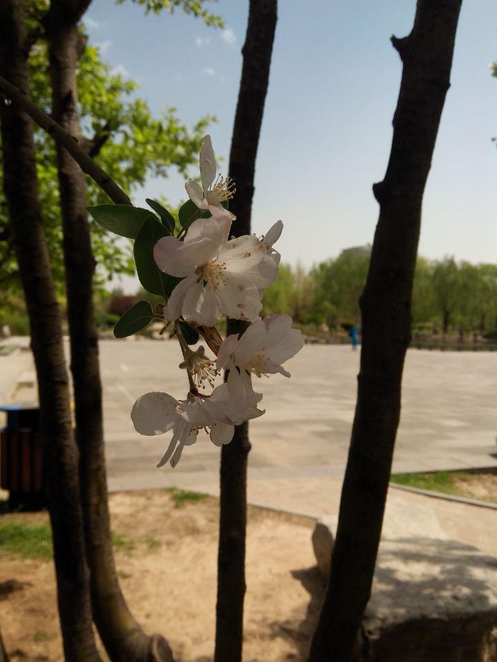 春天到了,公园里开满了鲜花,可惜本人见识甚微,不知道这些都是什么花,哪位老师能告诉我呢?