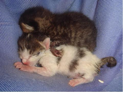 什么时候断奶_小猫什么时候断奶断奶后的饲养方法_百度知道