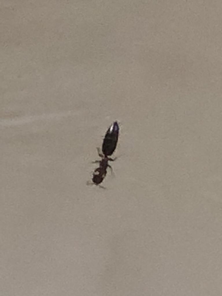 梦见好多蚂蚁进别人家里 梦见别人身上有蚂蚁