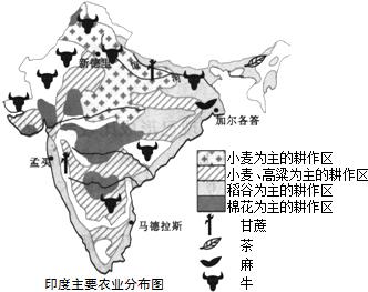 现在印度_印度现在的人口