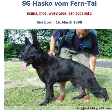 纯黑马犬图片_长的和狼青模样一样但是毛色是纯黑的狗是什么狗啊_百度知道