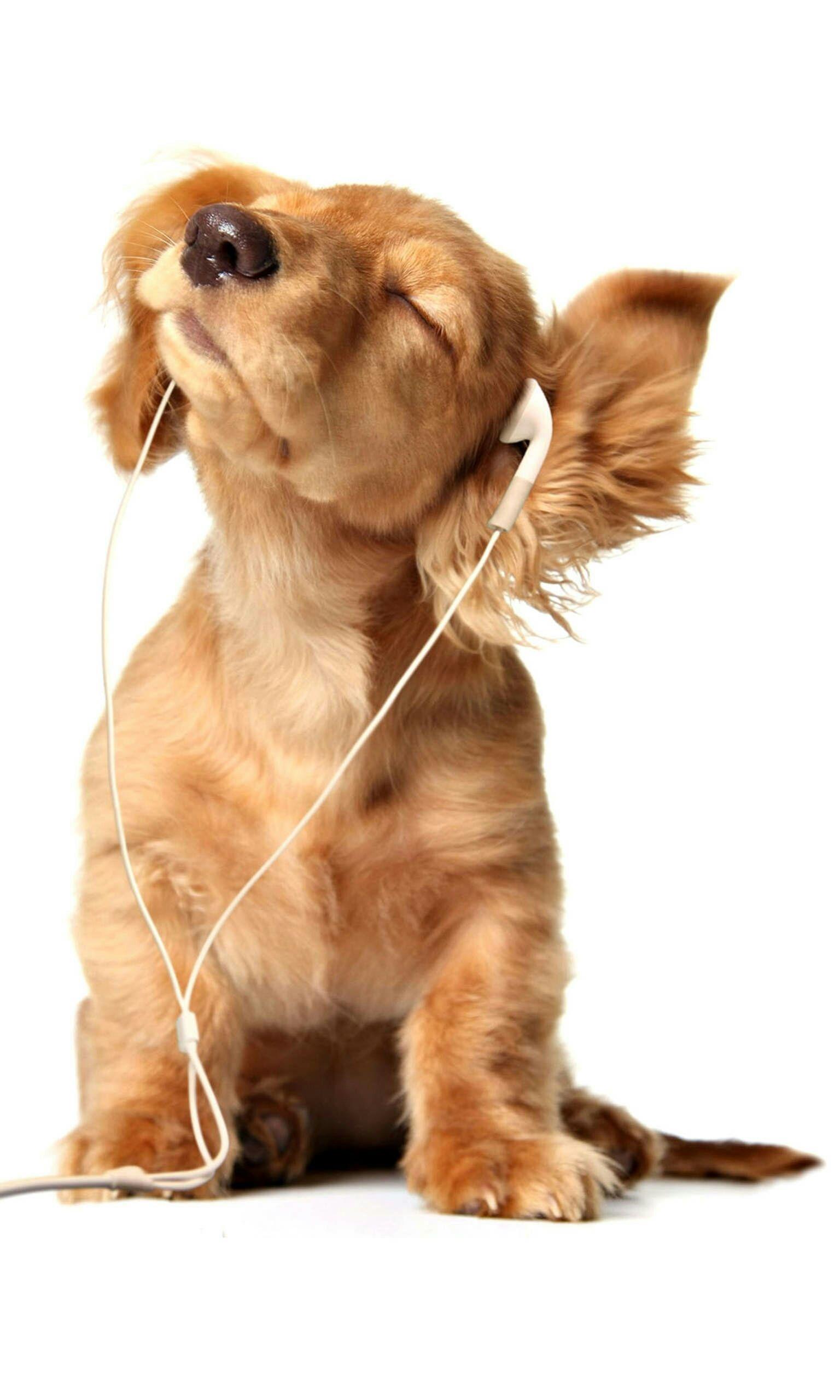狗狗的图片_求萌狗狗高清图片,做手机壁纸用的。拒绝带水印!什么狗狗都 ...