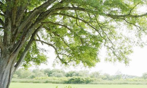 没有树会怎样_如果没有了树,会给人类带来哪些灾难?_百度知道