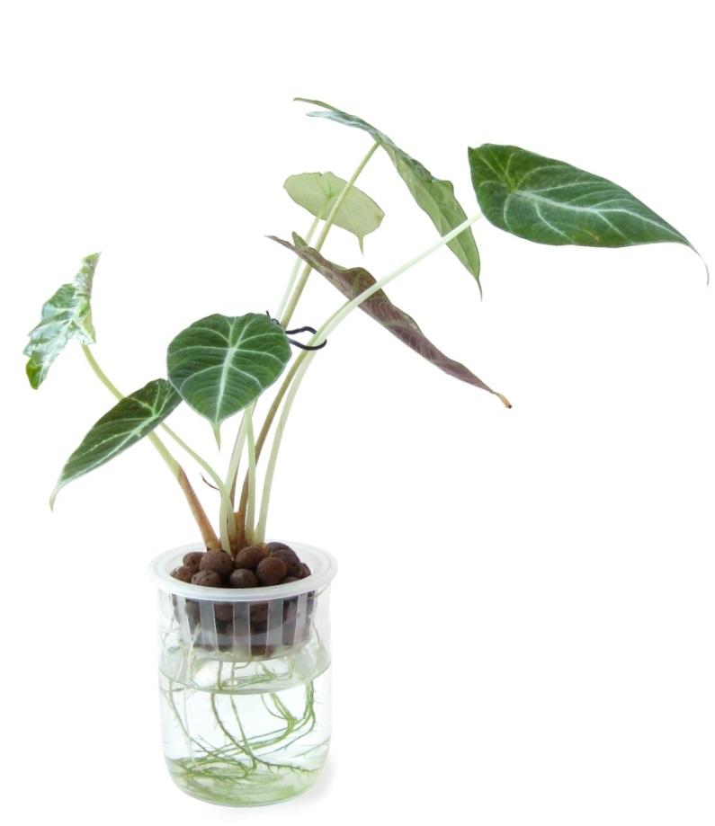 室內植物名稱 有圖片