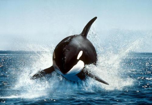 海豚 vpn 电脑 版