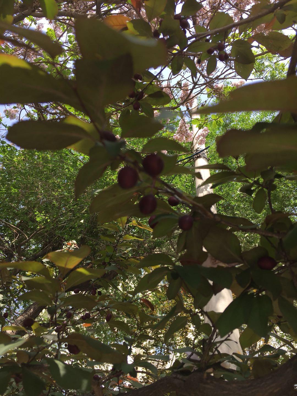 梦见树上结满了奇异的果子? 女人梦见果树结满果实