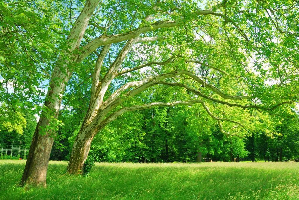 什么的树木_树叶茂密的一面是什么方向_百度知道